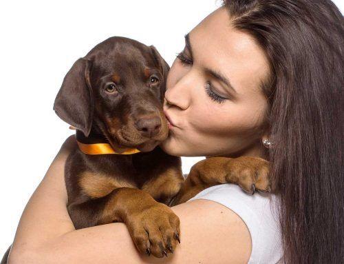 Köpeğinizle İlk Günler